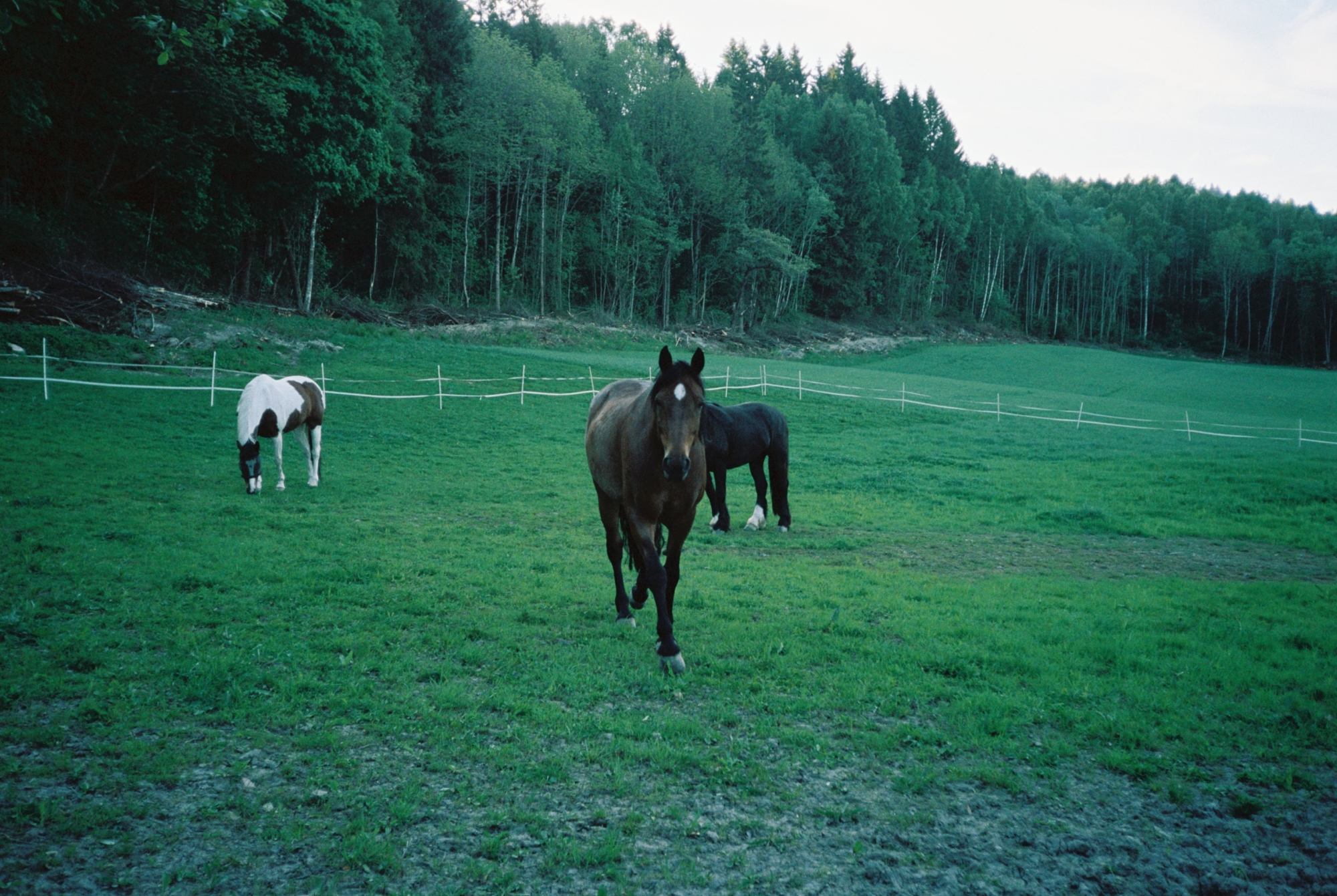Three horses stand in a field. The one nearest to the camera looks to be trotting toward the photographer.