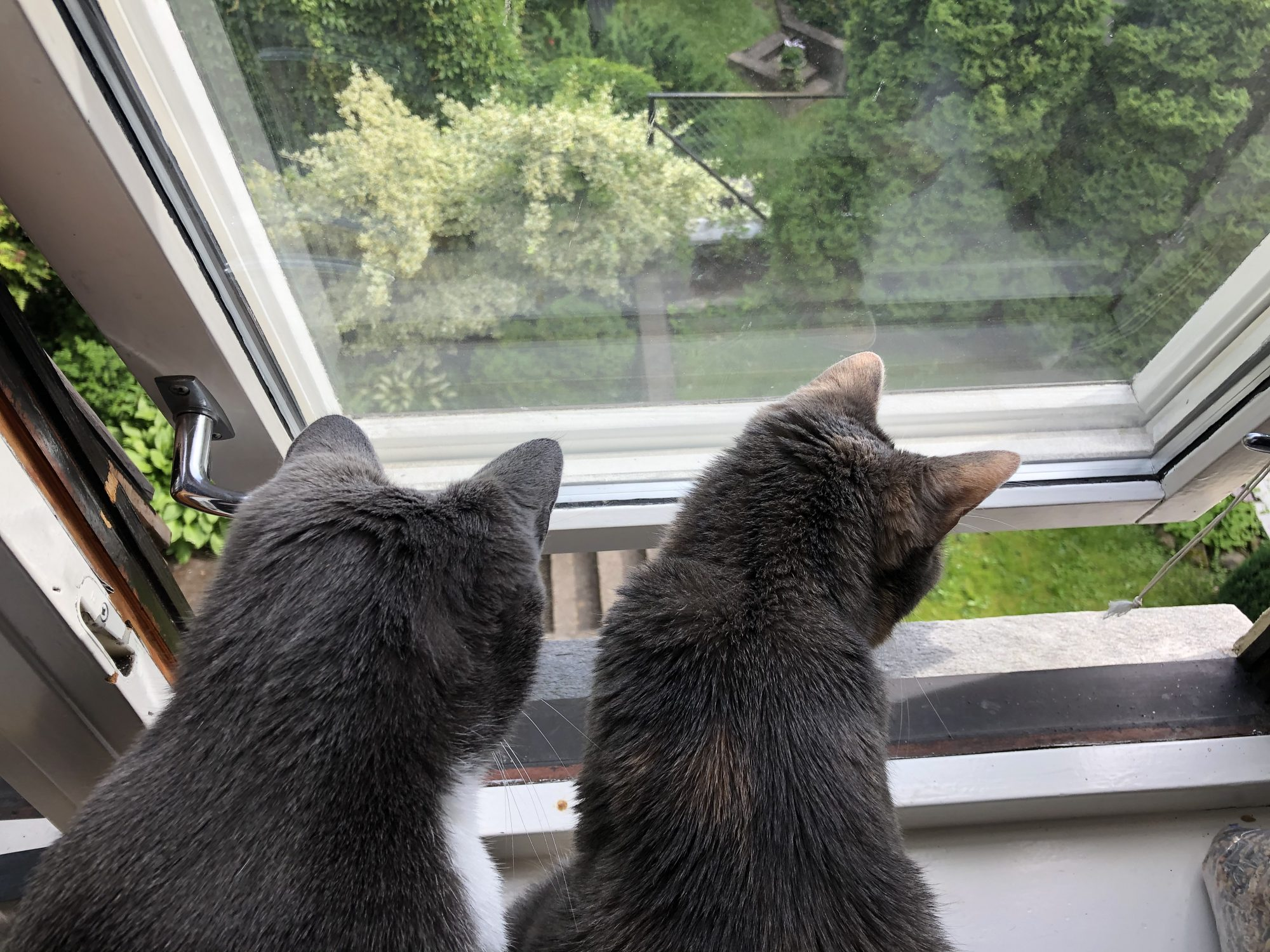 A photo of Matt's two cats sitting on the window ledge, looking out of the window which is slightly open.